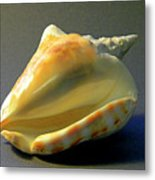 Strombus Inermis Seashell Metal Print