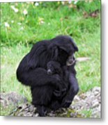 Strong Bond Between Mother And Monkey Metal Print