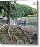Strong Roots In Japan Metal Print