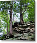 Strong Roots Metal Print