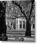 Student Reading Under Tree Metal Print