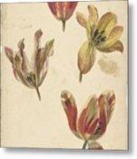 Studies Of Four Tulips, Elias Van Nijmegen, C. 1700 - C. 1725 Metal Print