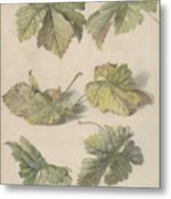 Studies Of Vine Leaves, Willem Van Leen, 1796 Metal Print