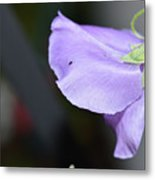 Study In Purple 2 Metal Print
