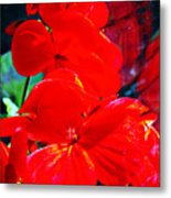 Study In Red Metal Print