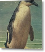 Study Of A Penguin Metal Print