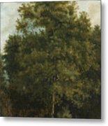 Study Of A Tree Metal Print