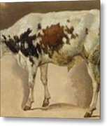 Study Of A Young Bull Metal Print