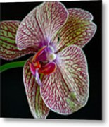 Study Of An Orchid 2 Metal Print