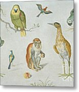 Study Of Birds And Monkeys Metal Print