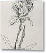 Study Of Flower Metal Print
