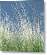 Study Of Grass Metal Print