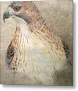 Study Of The Red-tail Hawk Metal Print by Leslie M Browning