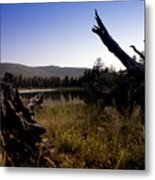 Stumped By The Lake Metal Print