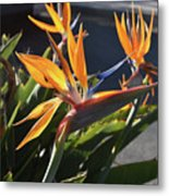 Stunning Bunch Of Flowers With Bright Orange Petals  Metal Print