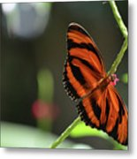 Stunning Orange And Black Oak Tiger Butterfly In Nature Metal Print