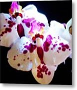 Stunning Twin Orchids Metal Print
