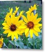 Stunning Wild Sunflowers Metal Print
