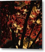 Subdued  Metal Print