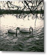 Subtle Swans  Metal Print
