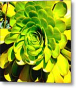 Succulent Close Up Metal Print
