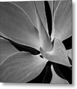 Succulent In Black And White Metal Print