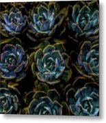 Succulent Metal Print by Rod Sterling