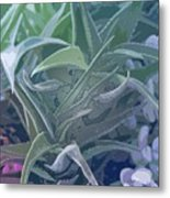 Succulents I Metal Print