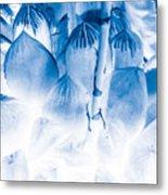 Succulents In Bleu Metal Print