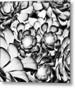 Succulents Monochrome Metal Print