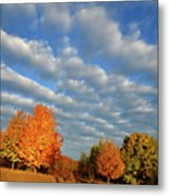 Sugar Maple Sunrise Along Route 31 Metal Print