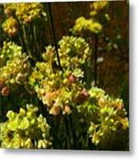 Sulfur Flower Metal Print