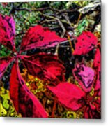 Sumac Beauty Metal Print