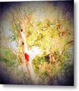 Sumac Tree In The Sunlight Metal Print