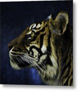 Sumatran Tiger Profile Metal Print