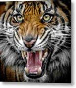Sumatran Tiger Snarl Metal Print