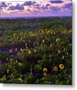 Summer Beach Daisies 1 Metal Print