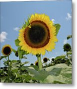 Summer Begin Metal Print