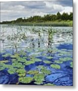 Summer Blue  Lake Under Clody Grey Sky With Forest On Coast Metal Print