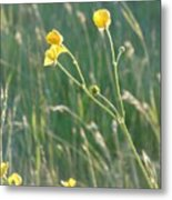 Summer Buttercups Metal Print