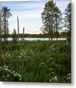 Summer By The Lake Enajarvi Metal Print