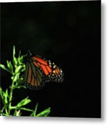 Summer Capture Metal Print