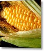 Summer Corn Xl Farm Nature Harvest Metal Print