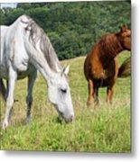 Summer Evening For Horses Metal Print