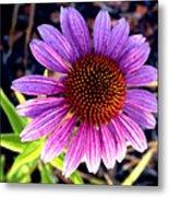 Summer Flower In Fading Light Metal Print