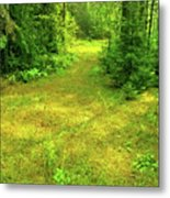 Summer Forest Metal Print