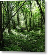 Summer Forest On A Sunny Day Metal Print