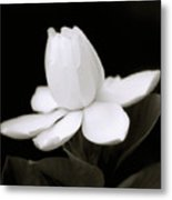 Summer Fragrance Metal Print