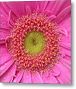 Summer Glory Metal Print