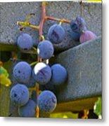 Summer Grapes Metal Print